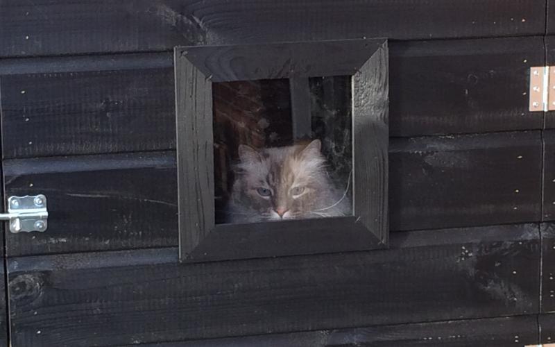 Kippenhok Kattenren sneek type A Kwaliteits dierenverblijven van der Land